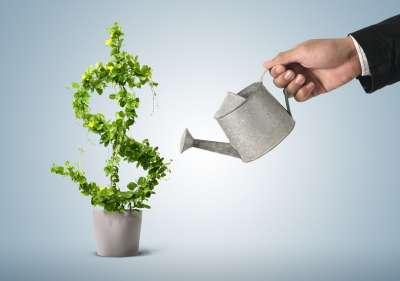 rastenie-v-vide-dollara